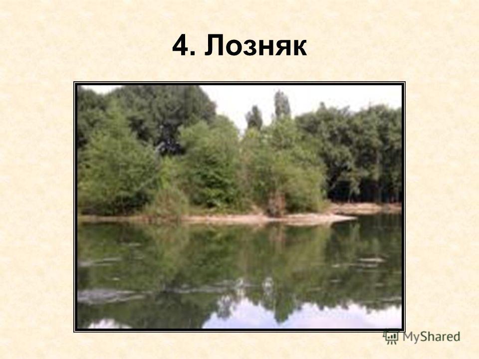4. Лозняк