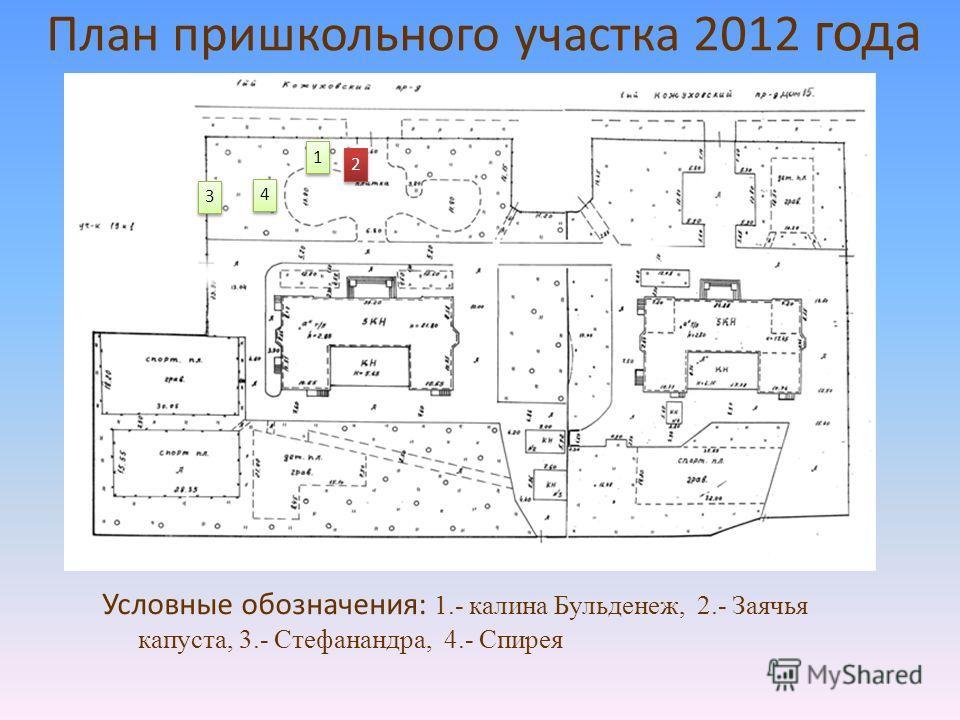 План пришкольного участка 2012 года 1 1 2 2 3 3 4 4 Условные обозначения: 1.- калина Бульденеж, 2.- Заячья капуста, 3.- Стефанандра, 4.- Спирея