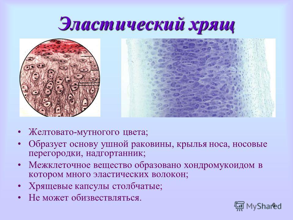 Ткань Эластическая фото