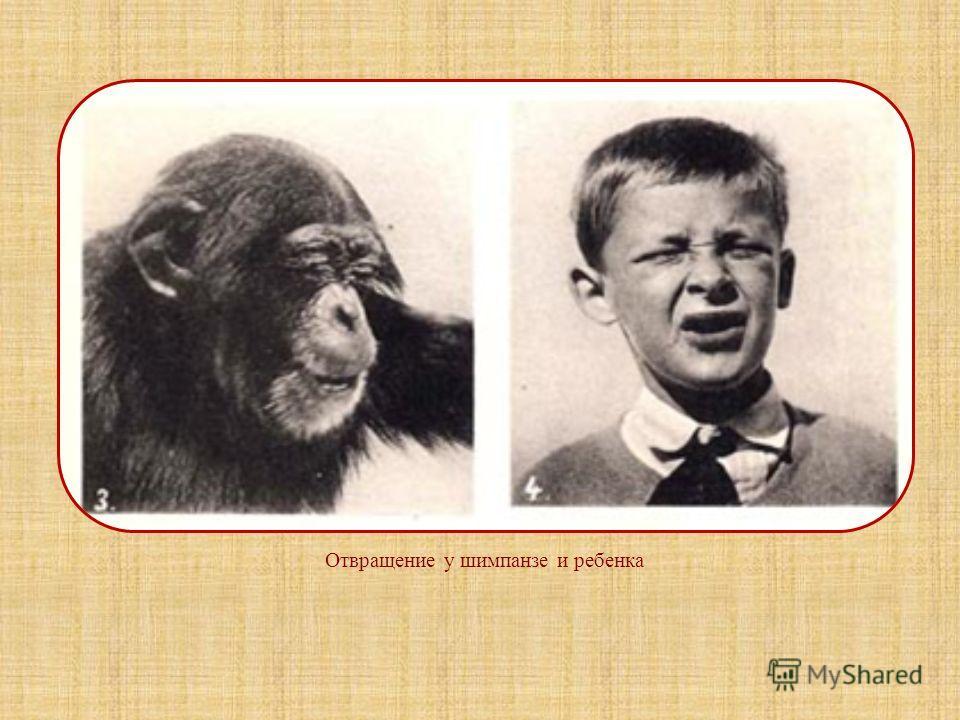 Происхождение эмоции отвращения Мы не можем проследить и уверенно обосновать эволюционное происхождение всех фундаментальных эмоций. Одним из немногих исключений является эмоция отвращения, представляющая собой дифференцированный аспект примитивного