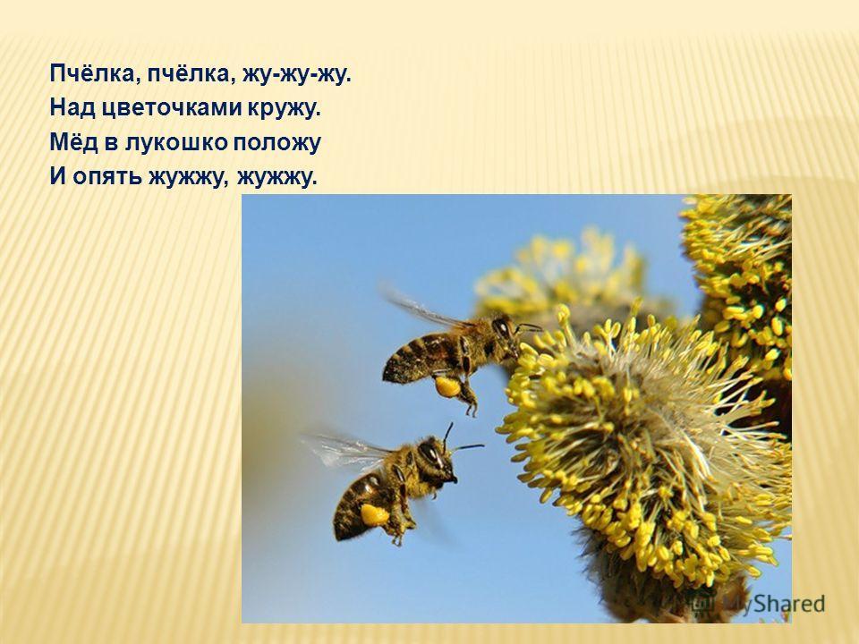 Пчёлка, пчёлка, жу-жу-жу. Над цветочками кружу. Мёд в лукошко положу И опять жужжу, жужжу.