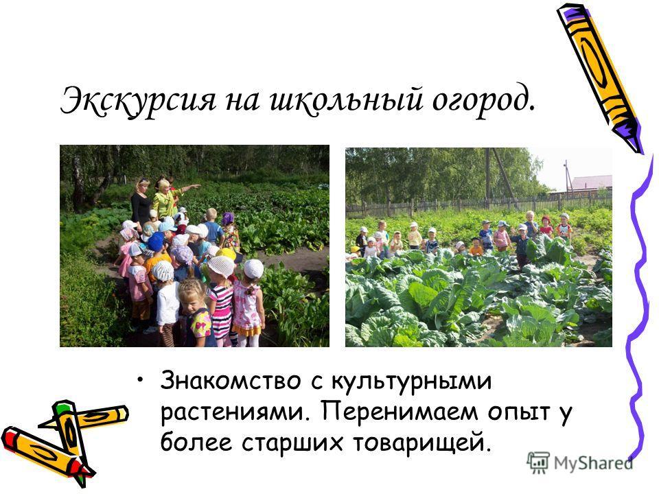 Экскурсия на школьный огород. Знакомство с культурными растениями. Перенимаем опыт у более старших товарищей.