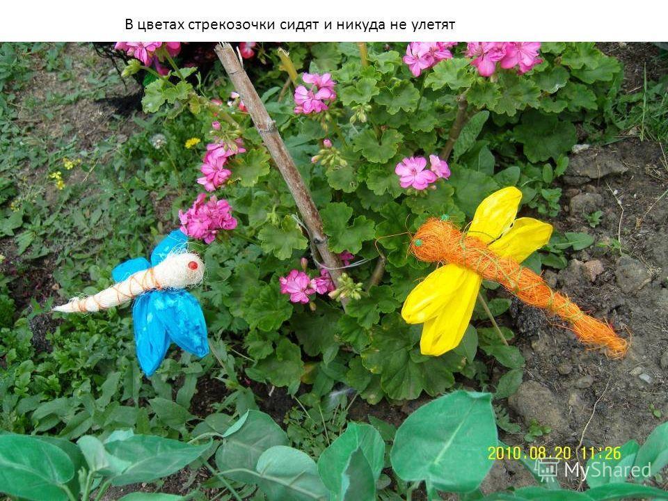 В цветах стрекозочки сидят и никуда не улетят