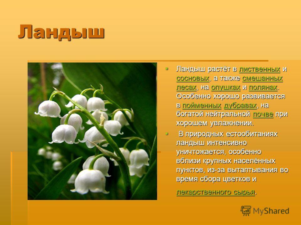 Ландыш Ландыш растёт в лиственных и сосновых, а также смешанных лесах, на опушках и полянах. Особенно хорошо развивается в пойменных дубравах, на богатой нейтральной почве при хорошем увлажнении. Ландыш растёт в лиственных и сосновых, а также смешанн