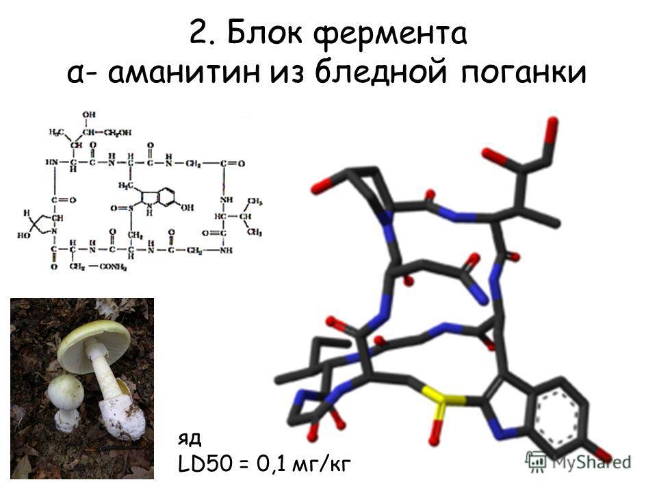 2. Блок фермента α- аманитин из бледной поганки яд LD50 = 0,1 мг/кг