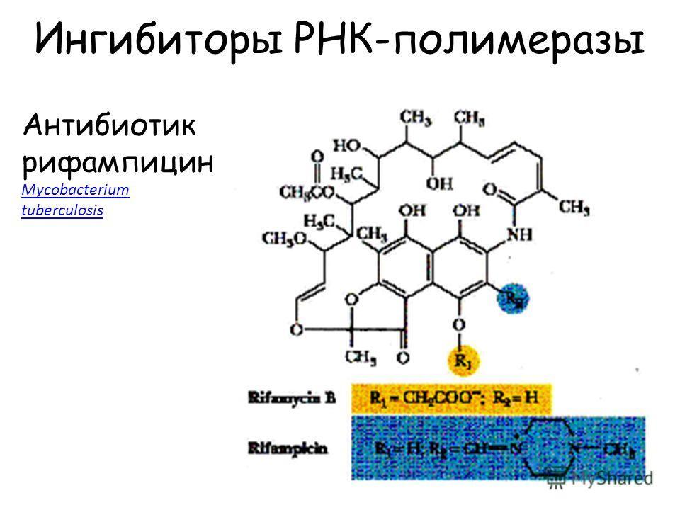 Ингибиторы РНК-полимеразы Антибиотик рифампицин Mycobacterium Mycobacterium tuberculosis