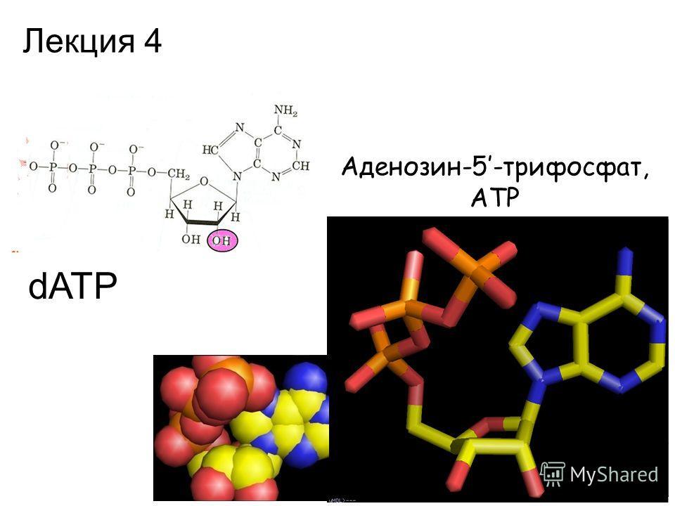 Аденозин-5-трифосфат, АТР dATP Лекция 4