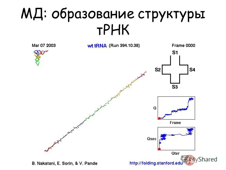 МД: образование структуры тРНК