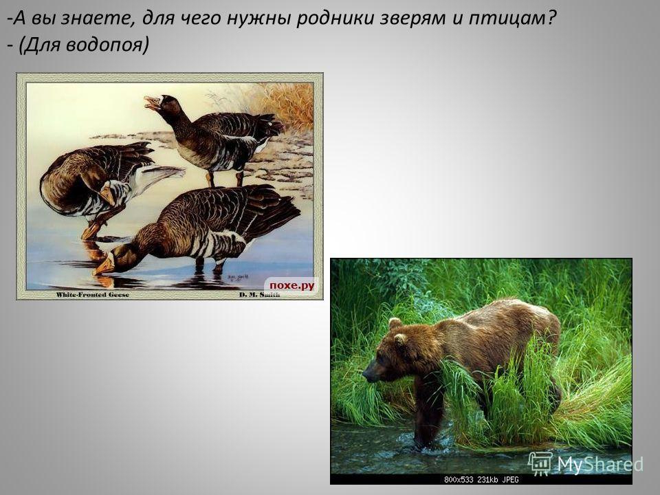 -А вы знаете, для чего нужны родники зверям и птицам? - (Для водопоя)