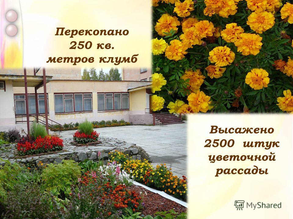 Высажено 2500 штук цветочной рассады Перекопано 250 кв. метров клумб
