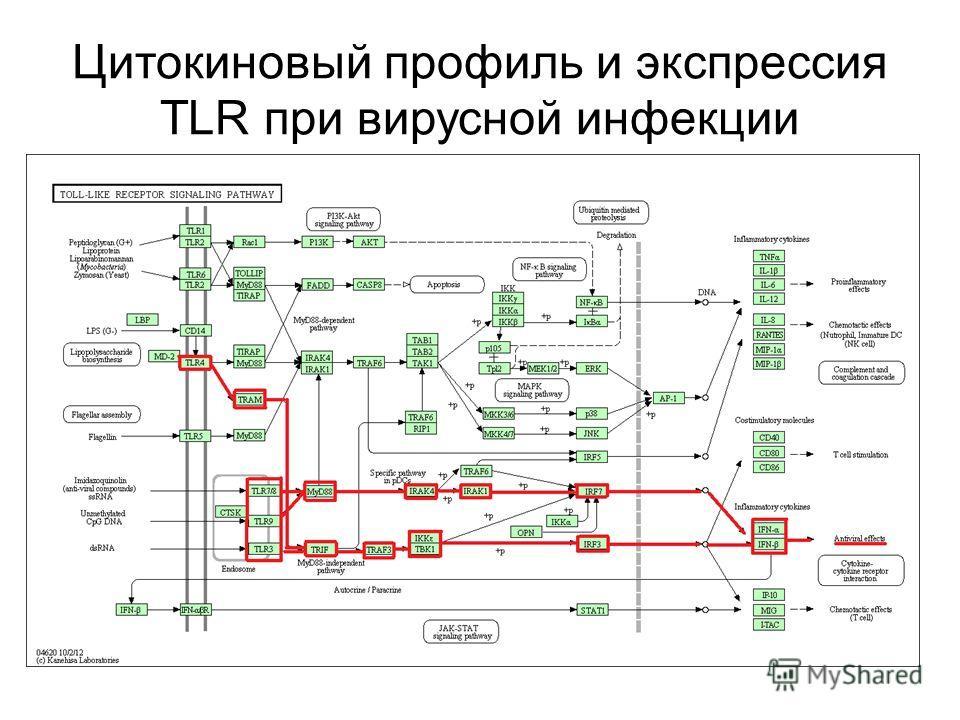 Цитокиновый профиль и экспрессия TLR при вирусной инфекции
