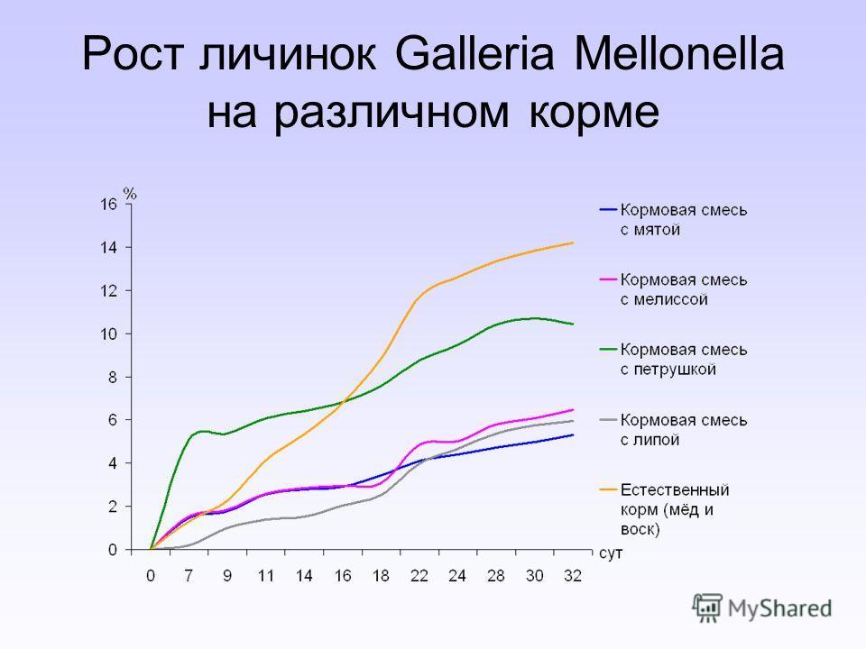 Рост личинок Galleria Mellonella на различном корме