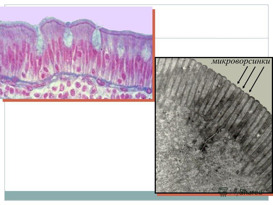микроворсинки