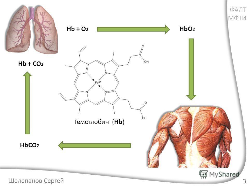 Гемоглобин (Hb) 3 HbO 2 HbCO 2 Hb + O 2 Hb + CO 2 ФАЛТ МФТИ Шелепанов Сергей