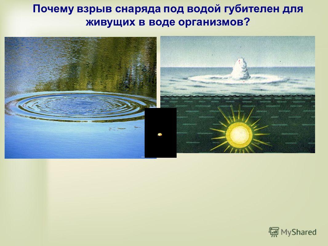 Почему взрыв снаряда под водой губителен для живущих в воде организмов?