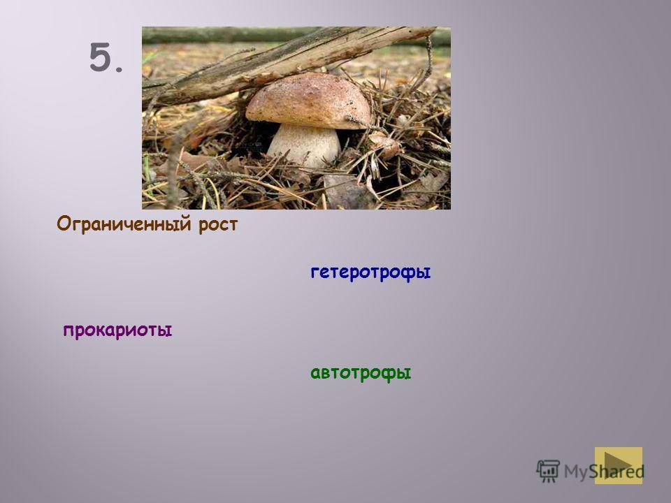 5. Группа Ограниченный рост гетеротрофы прокариоты автотрофы