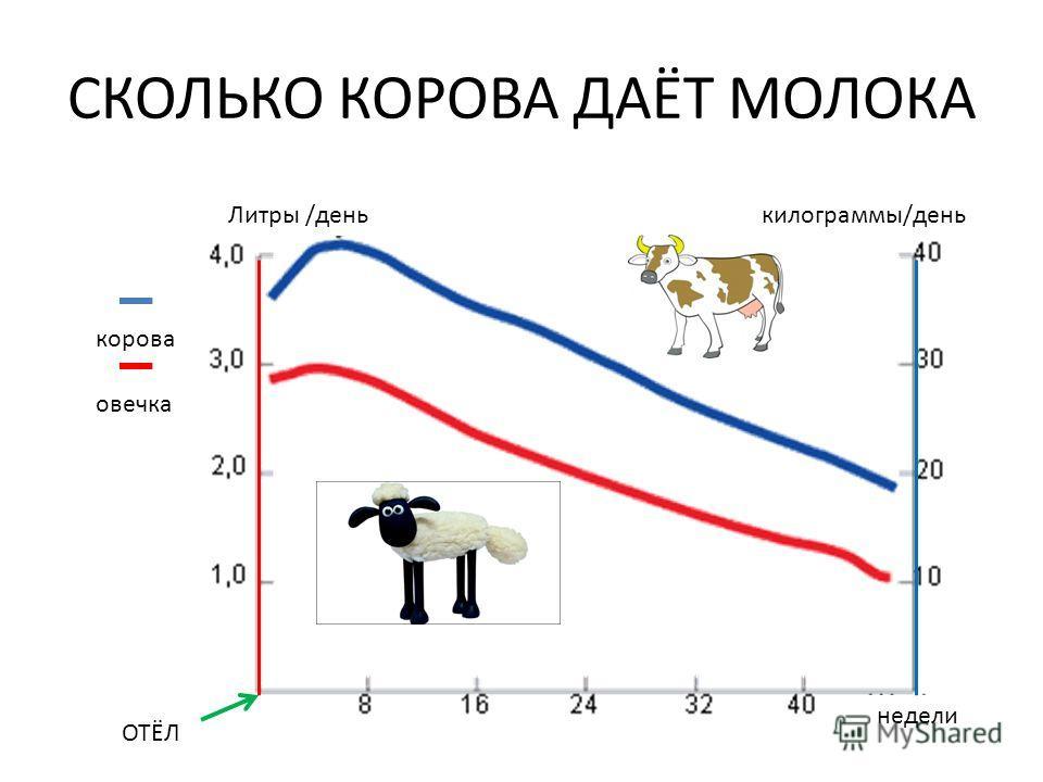 СКОЛЬКО КОРОВА ДАЁТ МОЛОКА корова овечка Литры /денькилограммы/день ОТЁЛ недели