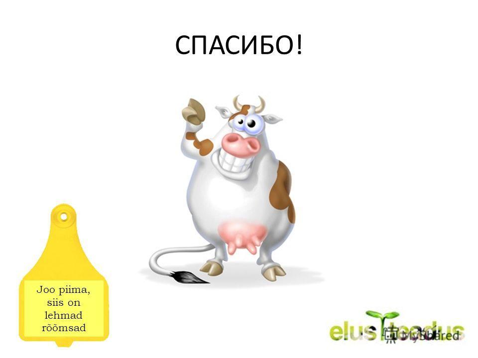 СПАСИБО! Joo piima, siis on lehmad rõõmsad