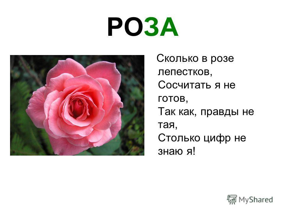 РОЗА Сколько в розе лепестков, Сосчитать я не готов, Так как, правды не тая, Столько цифр не знаю я!