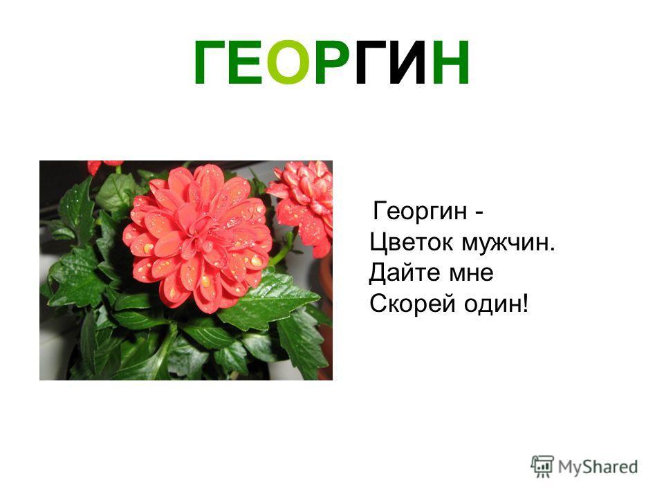 ГЕОРГИН Георгин - Цветок мужчин. Дайте мне Скорей один!