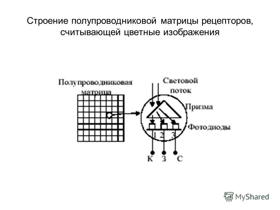 Строение полупроводниковой матрицы рецепторов, считывающей цветные изображения