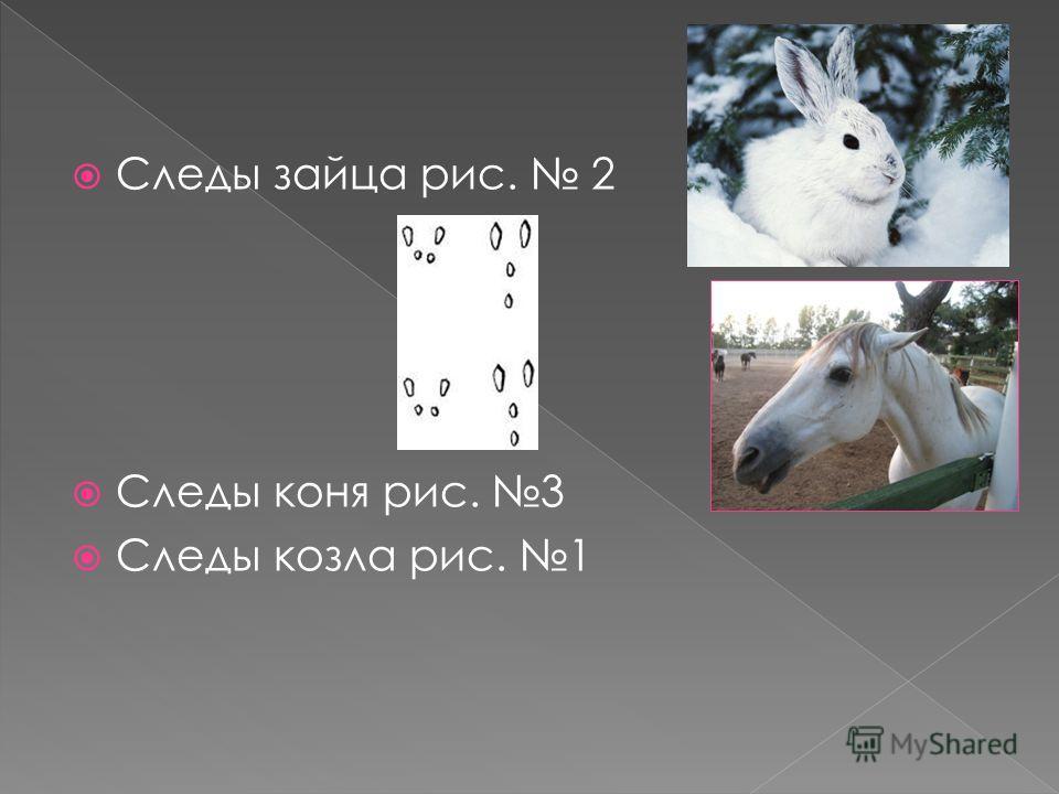 Следы зайца рис. 2 Следы коня рис. 3 Следы козла рис. 1
