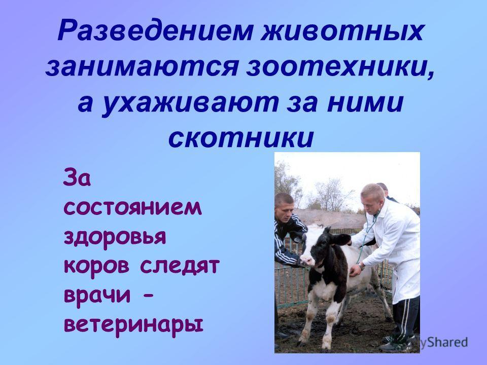 Разведением животных занимаются зоотехники, а ухаживают за ними скотники За состоянием здоровья коров следят врачи - ветеринары