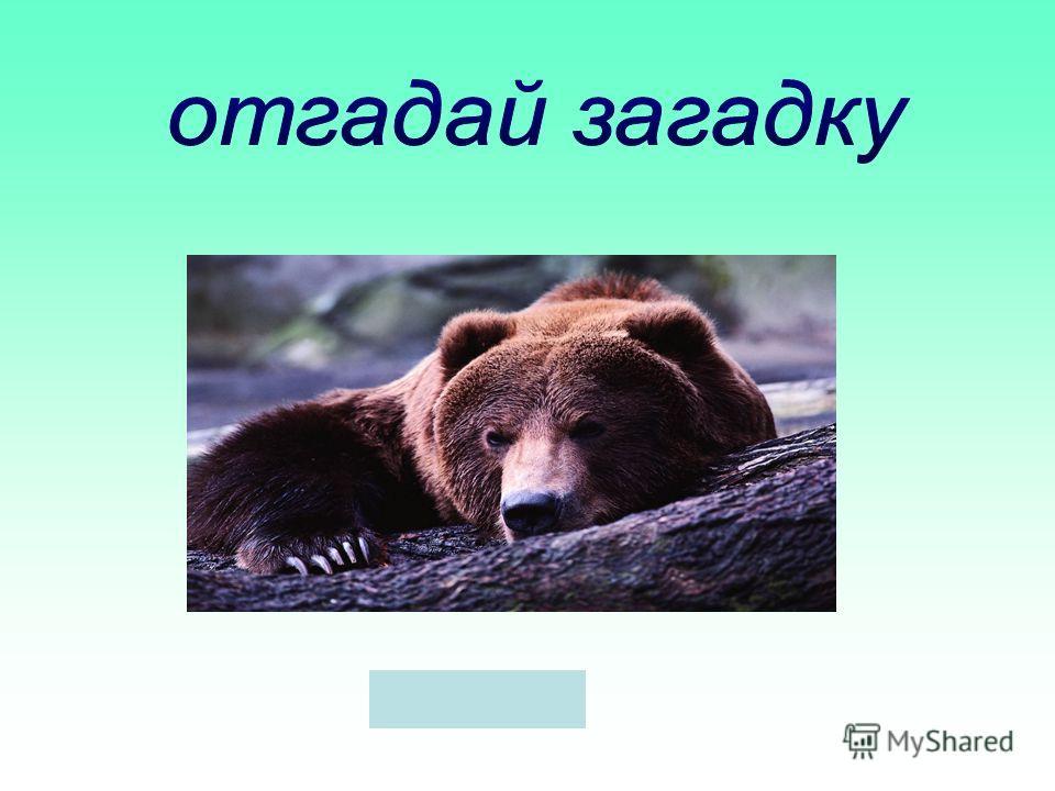 Летом ест малину, а зимой спит в берлоге. м е дведь