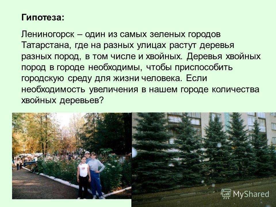 Гипотеза: Лениногорск – один из самых зеленых городов Татарстана, где на разных улицах растут деревья разных пород, в том числе и хвойных. Деревья хвойных пород в городе необходимы, чтобы приспособить городскую среду для жизни человека. Если необходи