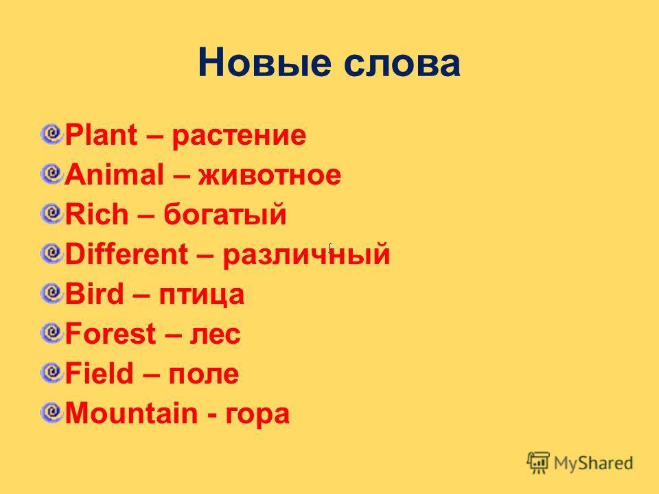 Новые слова Plant – растение Animal – животное Rich – богатый Different – различный Bird – птица Forest – лес Field – поле Mountain - гора