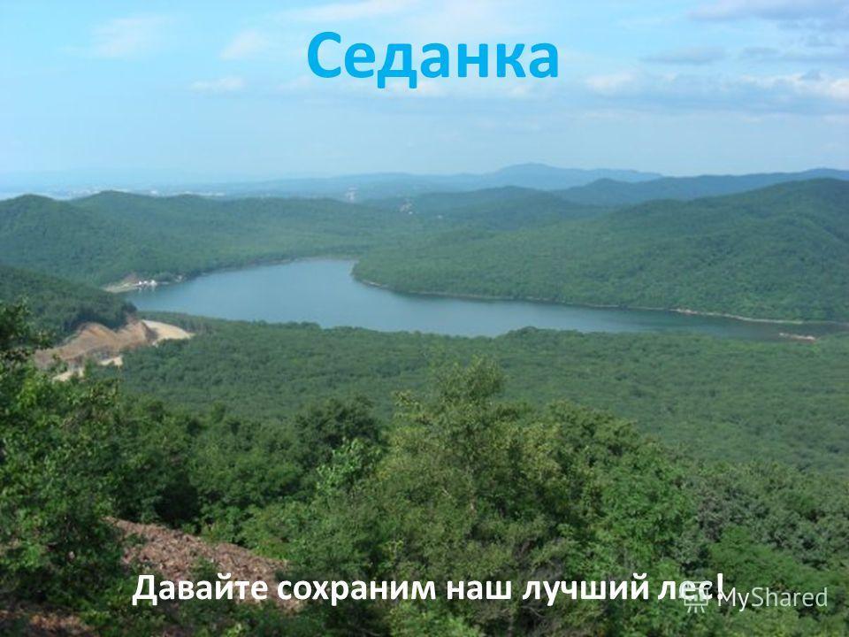 Седанка Давайте сохраним наш лучший лес!