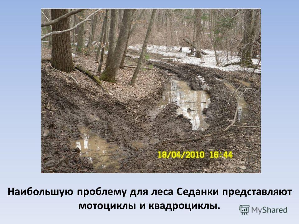 Наибольшую проблему для леса Седанки представляют мотоциклы и квадроциклы.