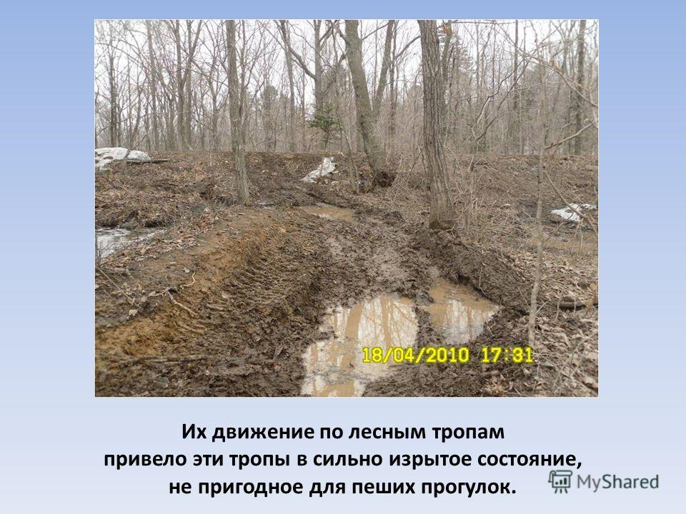Их движение по лесным тропам привело эти тропы в сильно изрытое состояние, не пригодное для пеших прогулок.