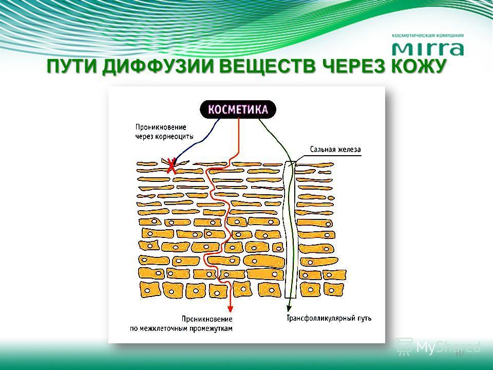 ПУТИ ДИФФУЗИИ ВЕЩЕСТВ ЧЕРЕЗ КОЖУ 10