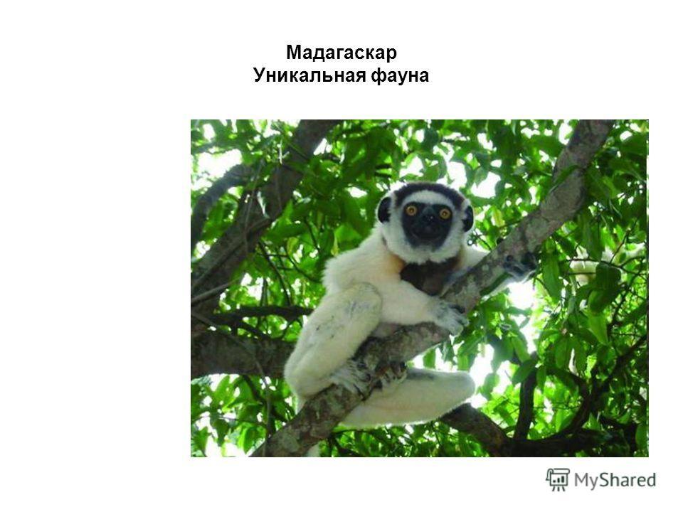 Мадагаскар Уникальная фауна