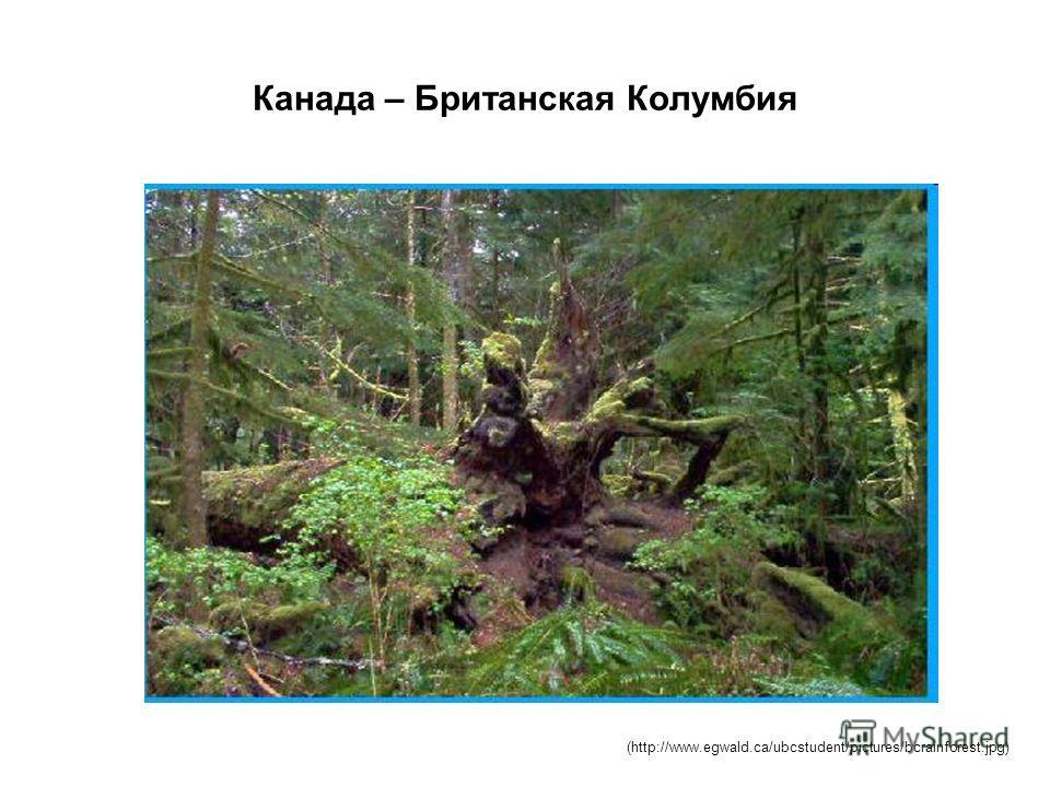 Канада – Британская Колумбия (http://www.egwald.ca/ubcstudent/pictures/bcrainforest.jpg)