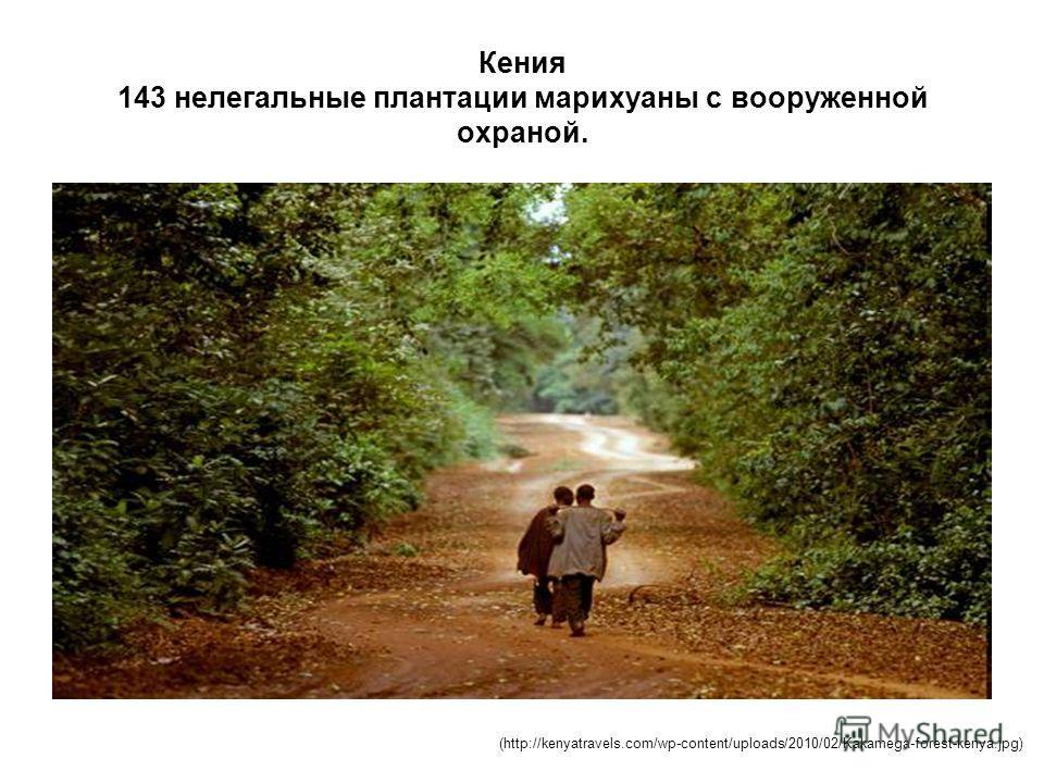 Кения 143 нелегальные плантации марихуаны с вооруженной охраной. (http://kenyatravels.com/wp-content/uploads/2010/02/Kakamega-forest-kenya.jpg)