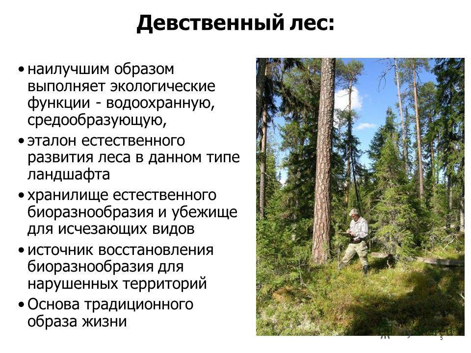 5 Девственный лес: наилучшим образом выполняет экологические функции - водоохранную, средообразующую, эталон естественного развития леса в данном типе ландшафта хранилище естественного биоразнообразия и убежище для исчезающих видов источник восстанов