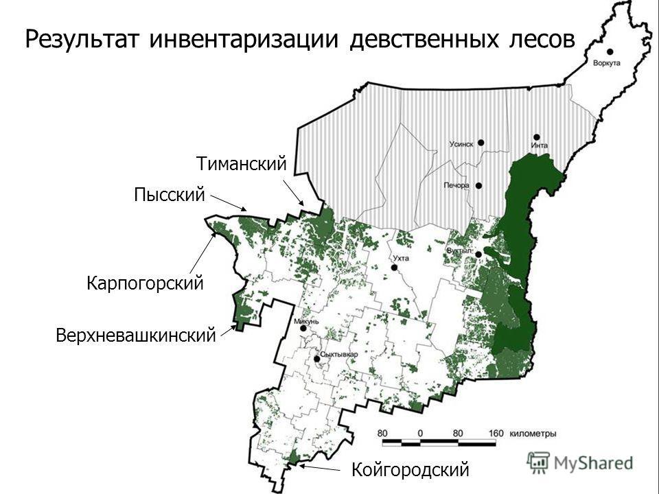 6 Результат инвентаризации девственных лесов Тиманский Пысский Верхневашкинский Карпогорский Койгородский