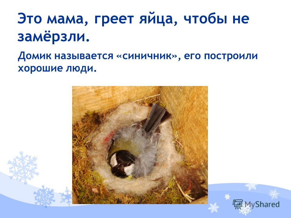 Домик называется «синичник», его построили хорошие люди. Это мама, греет яйца, чтобы не замёрзли.