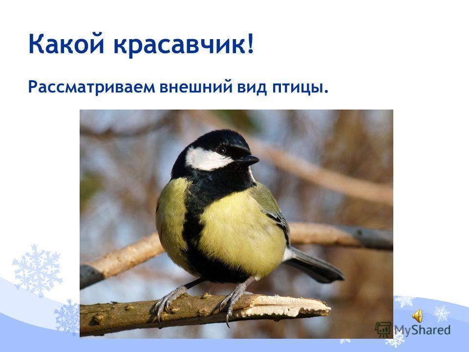 Рассматриваем внешний вид птицы. Какой красавчик!
