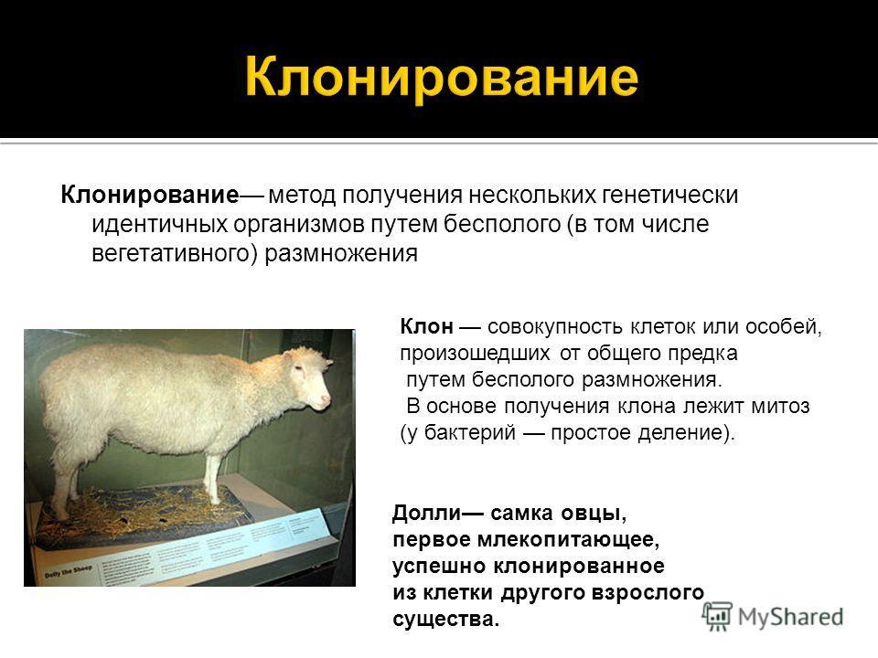 Клонирование метод получения нескольких генетически идентичных организмов путем бесполого (в том числе вегетативного) размножения Долли самка овцы, первое млекопитающее, успешно клонированное из клетки другого взрослого существа. Клон совокупность кл