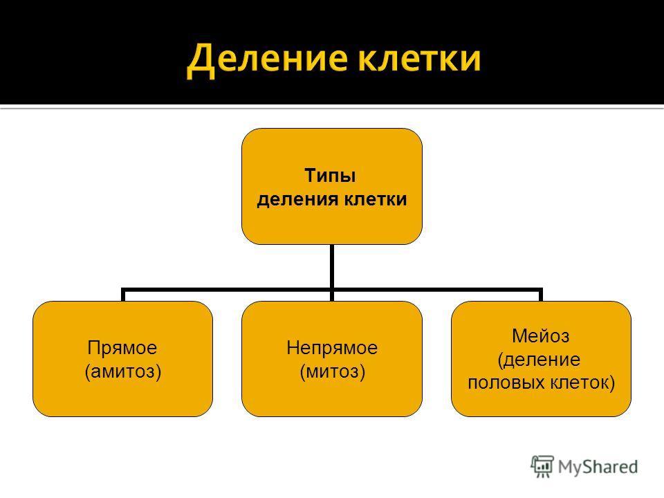Типы деления клетки Прямое (амитоз) Непрямое (митоз) Мейоз (деление половых клеток)