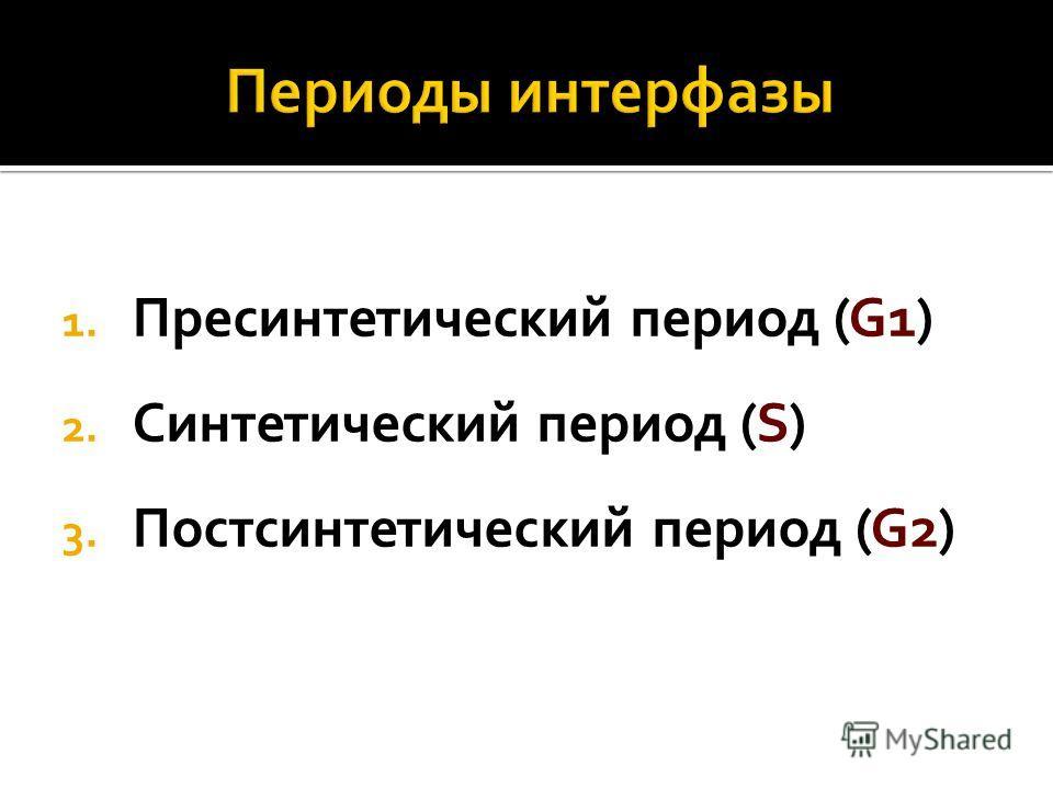 1. Пресинтетический период (G1) 2. Синтетический период (S) 3. Постсинтетический период (G2)