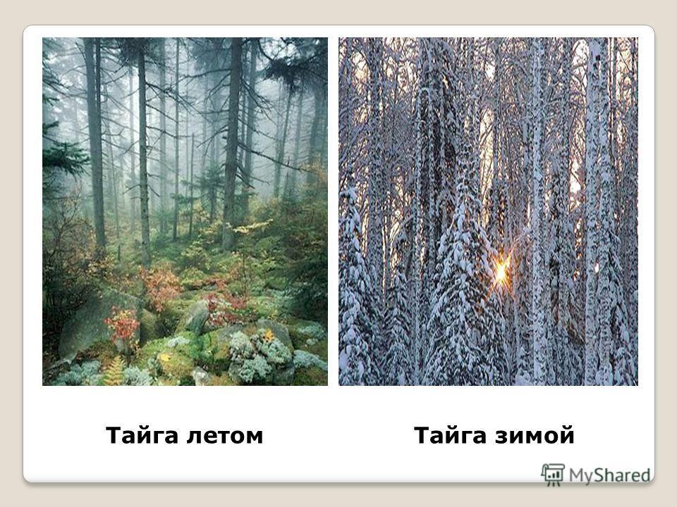Тайга летомТайга зимой