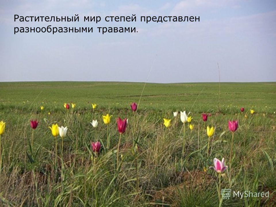 Растительный мир степей представлен разнообразными травами.