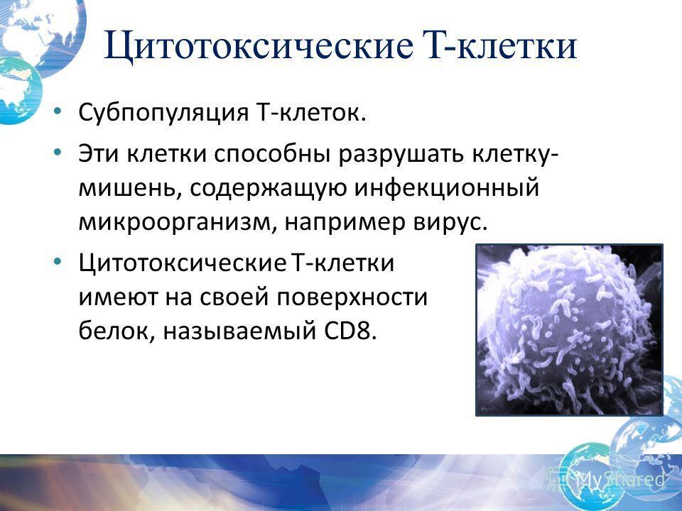 Цитотоксические T-клетки Субпопуляция Т-клеток. Эти клетки способны разрушать клетку- мишень, содержащую инфекционный микроорганизм, например вирус. Цитотоксические T-клетки имеют на своей поверхности белок, называемый CD8.