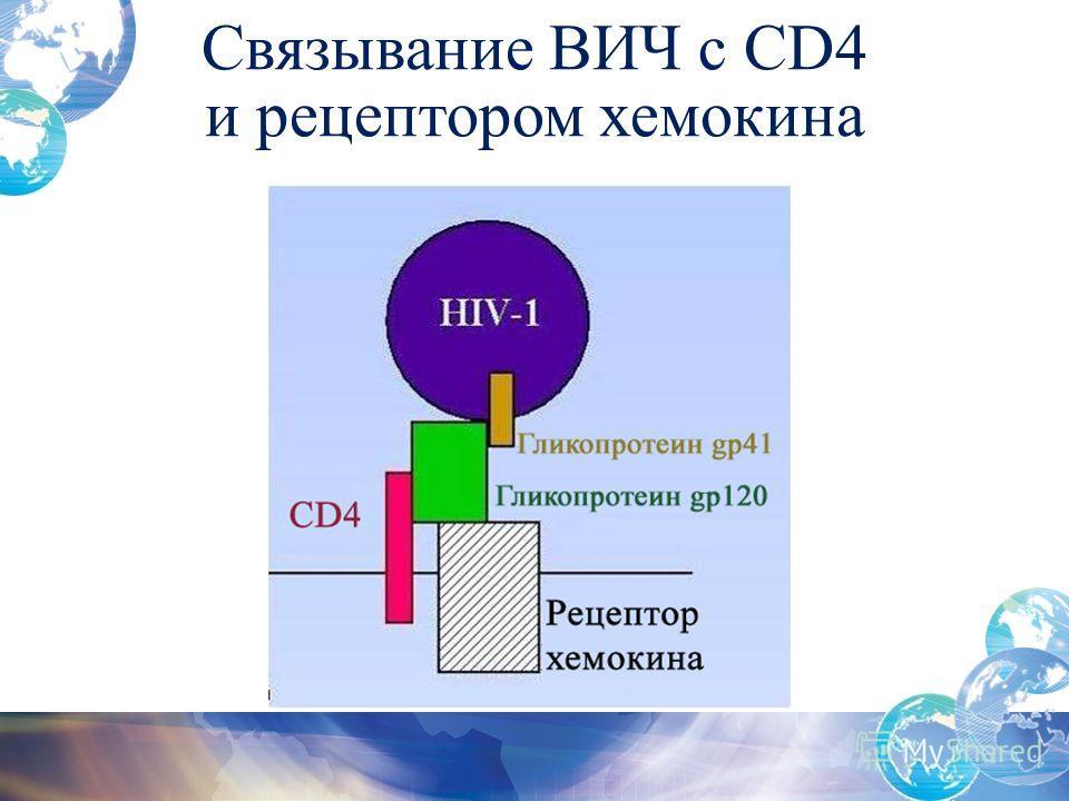 Связывание ВИЧ с CD4 и рецептором хемокина