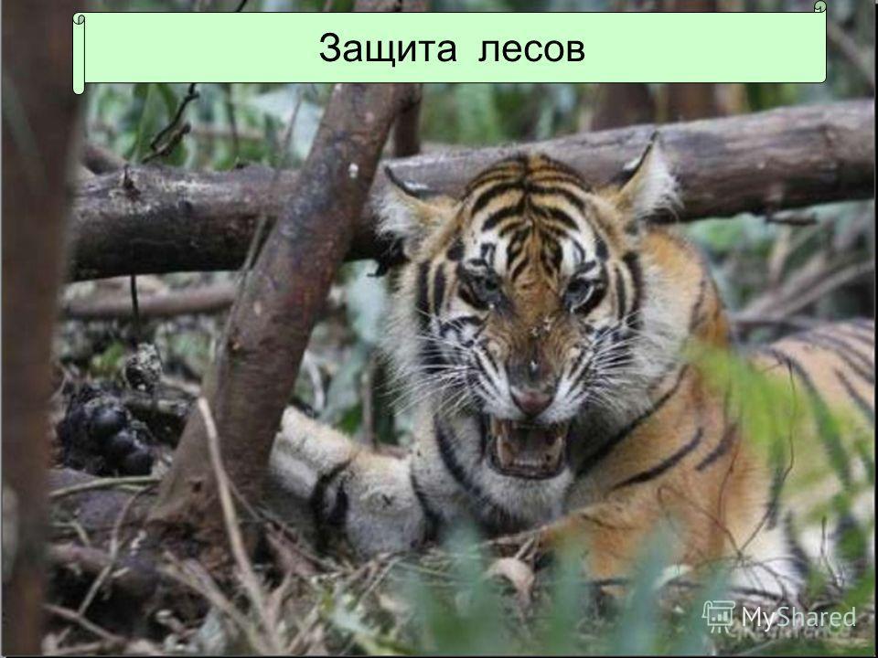 Защита лесов