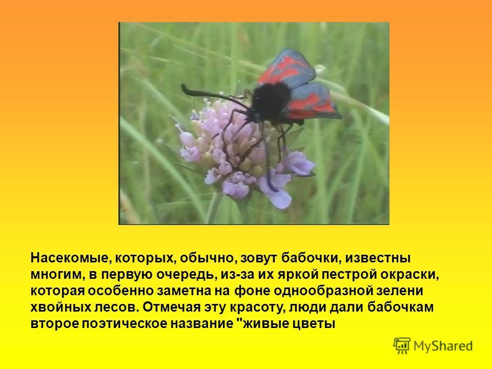 Насекомые, которых, обычно, зовут бабочки, известны многим, в первую очередь, из-за их яркой пестрой окраски, которая особенно заметна на фоне однообразной зелени хвойных лесов. Отмечая эту красоту, люди дали бабочкам второе поэтическое название